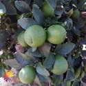 Naranjas Zumo 20Kg